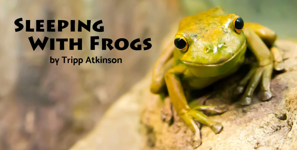 Sleeping with Frogs (How today's stubbornness leads to tomorrow's hot mess!)